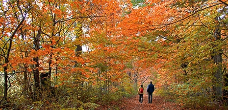 Strolling through the autumn forest in The Berkshires of western